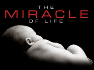 Miracle of life Pic smaller